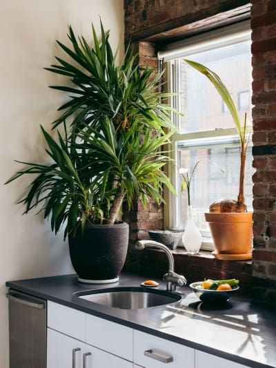 Best House Plants To Keep In The Kitchen Jungle Chic Home Decor