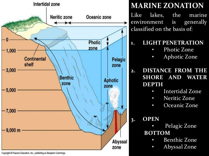 27 Best Geology Images On Pinterest Earth Science Geology And