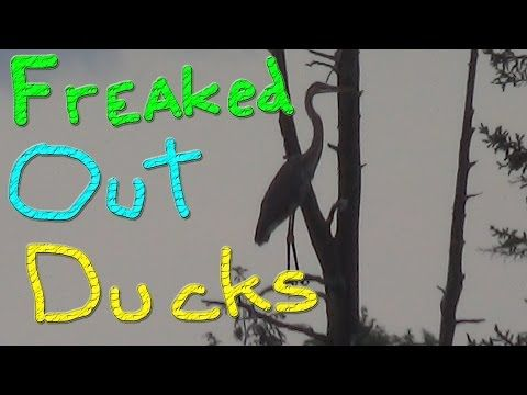 Going To The VET… #123 Ducks For The Homeless - YouTube
