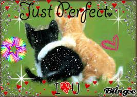 Resultado de imagen para imagenes de gatitos bebes