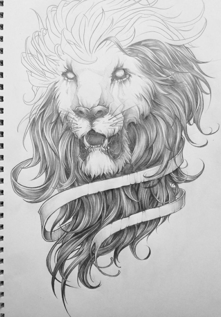 behance the lion sketch exploration by charles ap
