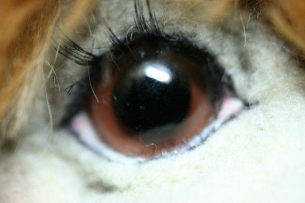 Detail of needle felted eye
