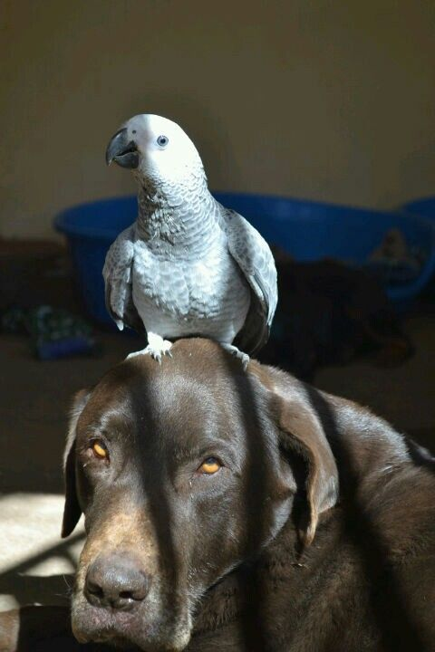 Dogs are mans best friend? No! - maybe birds best friend.