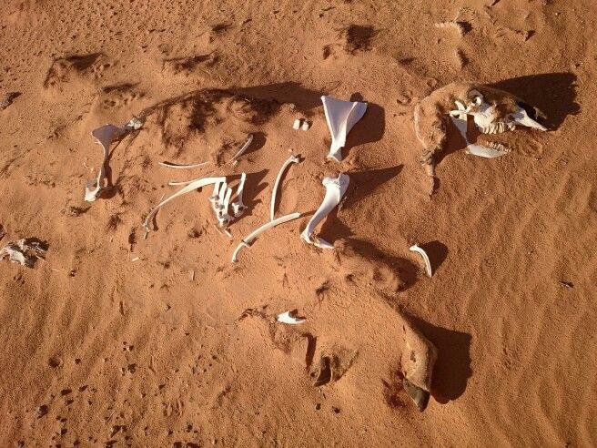 Desert and bones 6