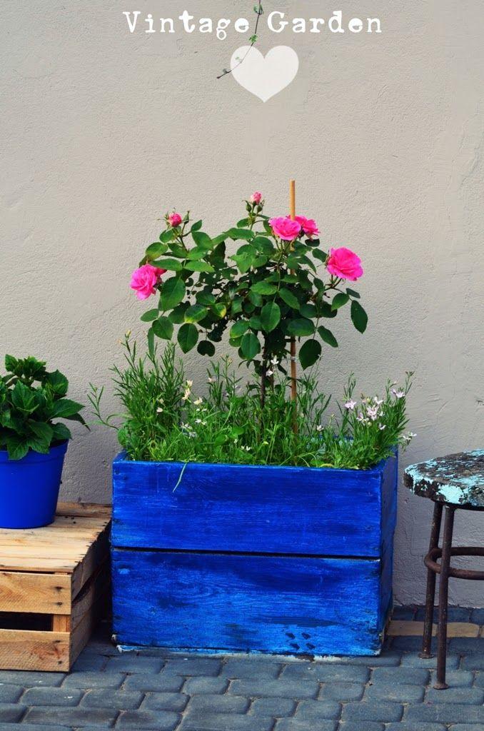 Vintage Garden : O księżycu, śluzownicy zwyczajnej i królowej lata