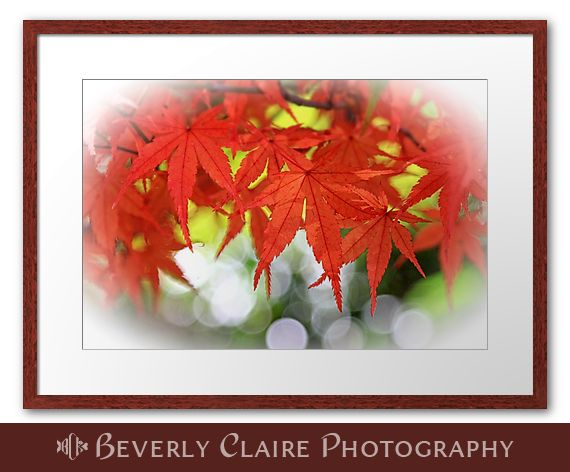 Colors of #autumn! Vivid #maple #leaves with white #bokeh #fall #season #vibrant #beautiful #nature #foliage #botanical. See more on my blog: http://bit.ly/1p0K5B3