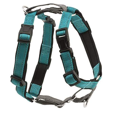 Petsafe 3 In 1 Harness Large Teal Petco In 2020 Easy Walk Harness Dog Harness Teal