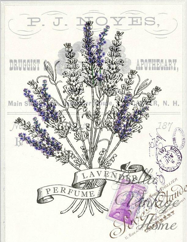 Botanical Print Lavender Perfume                                                                                                                                                                                 Más