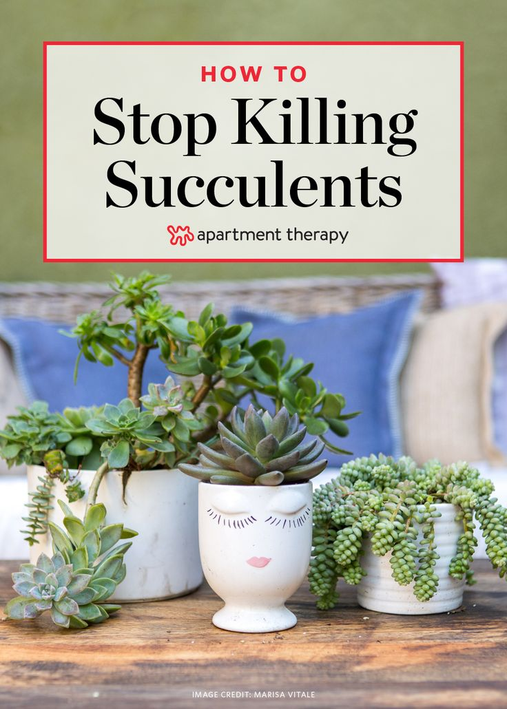 Best 25 inside garden ideas on pinterest inside plants for How to keep succulents alive indoors