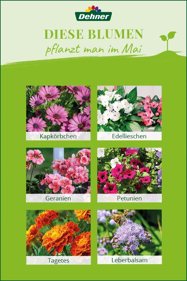 Diese Blumen Pflanzt Man Im Mai Pflanzen Blumen Pflanzen Fruhlingsgarten