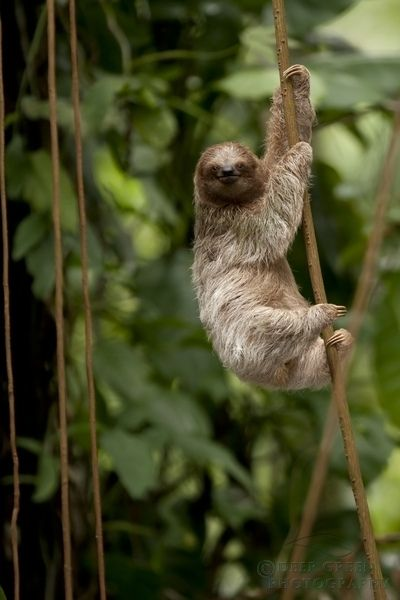 Peaceful and easygoing, Sloths take things at their own pace and live moment to moment. They are considerate, pleasant, caring, and mellow. Their values are important to them, but they are not ones who particularly care about defending or debating their views publicly. Don't call them lazy — maybe they are just more relaxed than the rest of us.