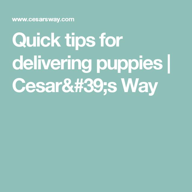 Quick tips for delivering puppies