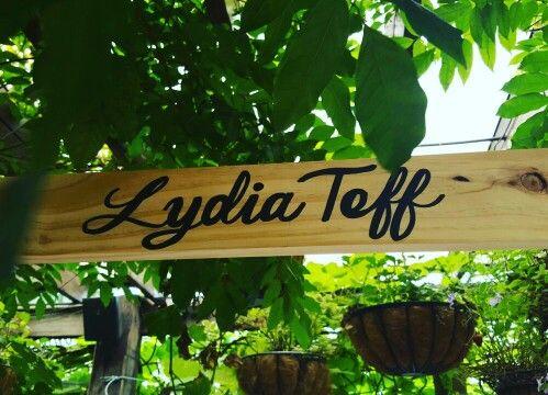 Lydia Teff #lydiateff