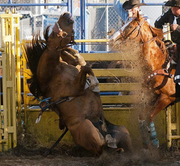 Help stop rodeo cruelty in Montreal - Vancouver Humane Society