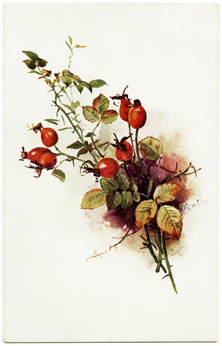 Old Design Shop ~ free digital image: vintage Tuck's Wild Berries postcard