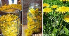 Il tarassaco è un cibo e medicina potente. E' un'erba spontanea che cresce nei giardini e nei campi ed in passato le nostre nonne lo raccoglievano per preparare tanti piatti ma anche molti rimedi naturali curativi.