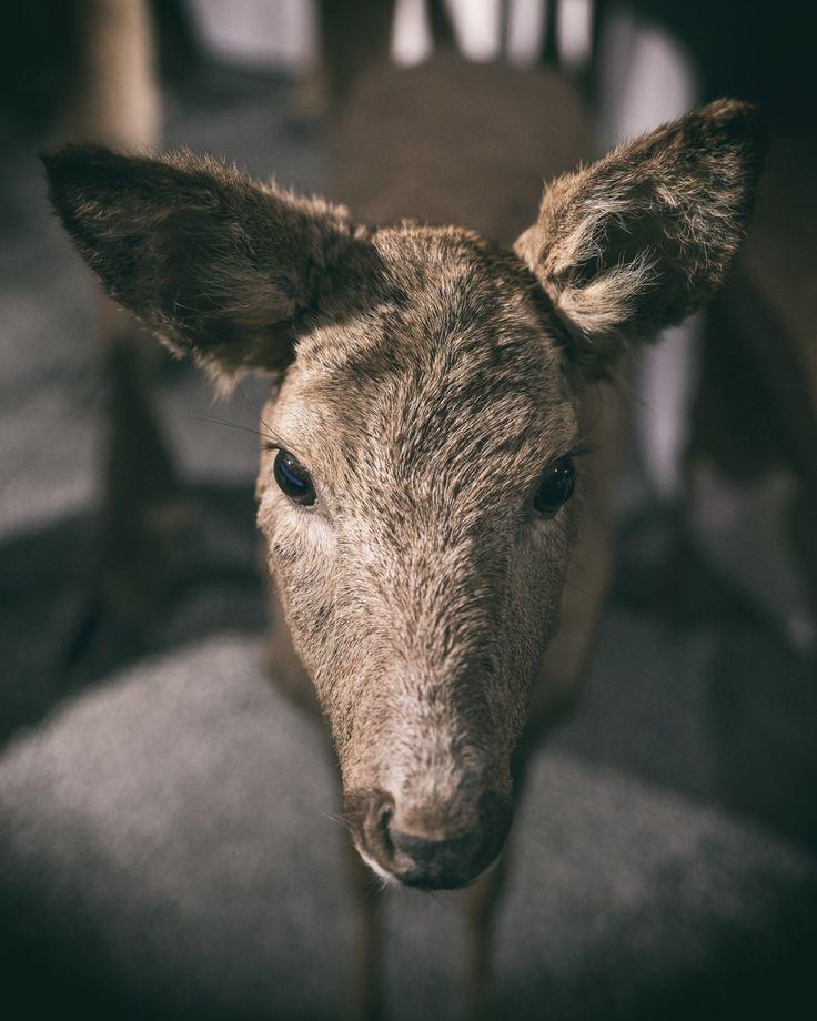 Day 38 - Deer