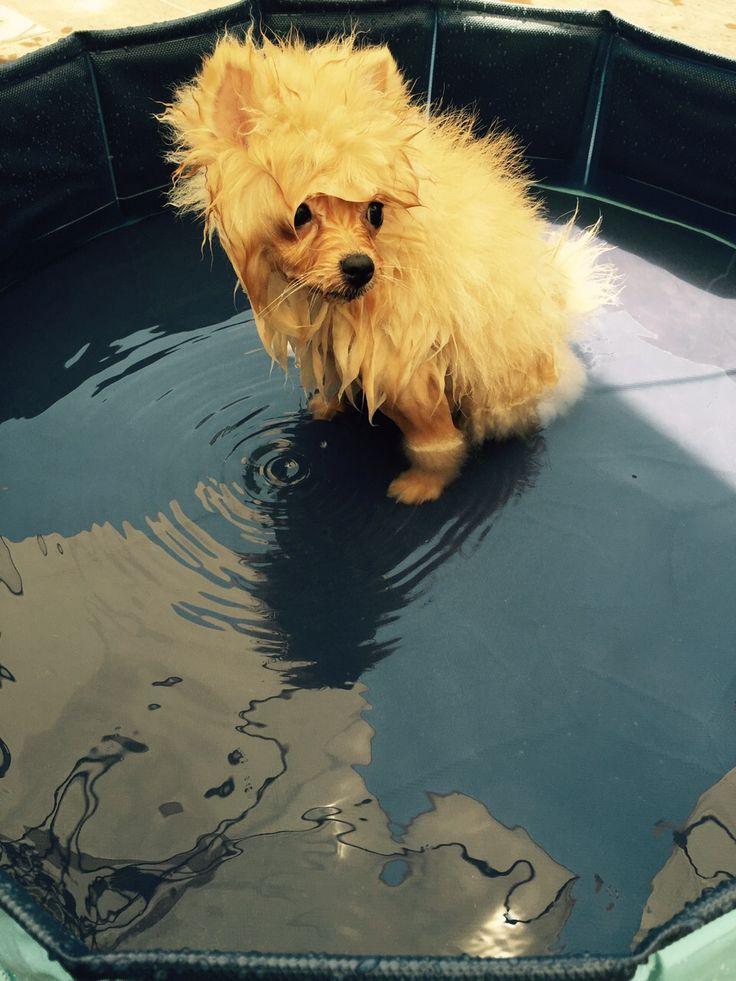 M s de 25 ideas incre bles sobre piscinas para perros en for Estanque para perros