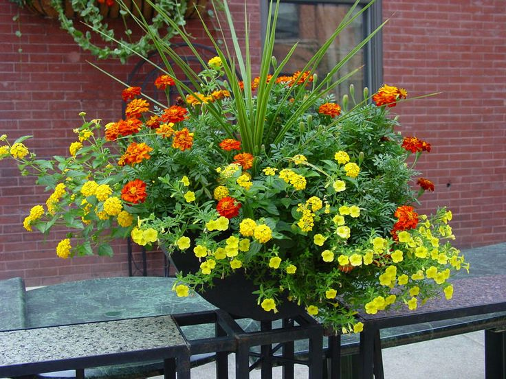 container inspirationGardens Ideas, Container Gardens, Container Flower, Flower Pots, Container Plants, Summer Colors, Flower Colors, Annual Flower, Gardens Plants