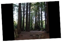 Campsites at the Crescent City/Redwoods KOA. Will be back soon!