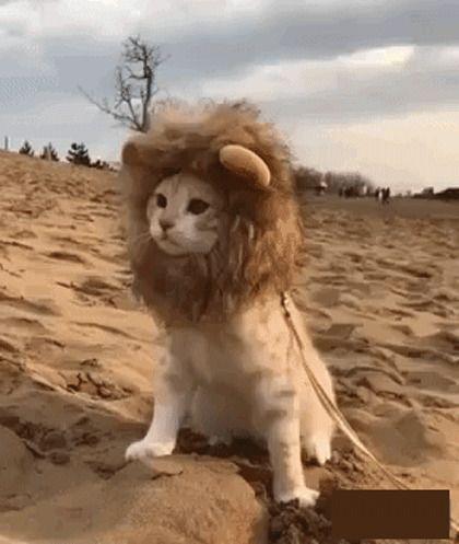 Домашний лев / АйДаПрикол :)