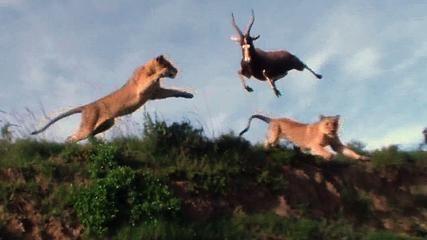 Tiger Attacks Man: Real Tiger Attack Stunt - Video Dailymotion