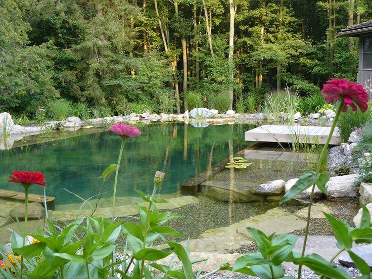 Natural swimming pool chemical-free pool flowers landscaping - John's Pools & Ponds, ON - BioNova