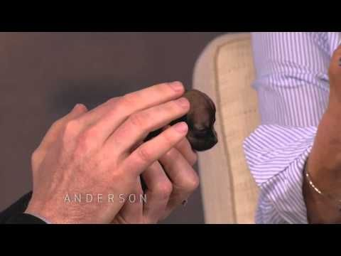 Beyonce: One of the World's Smallest Dogs in the world... i'm gonna die now