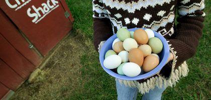 Tortilla de clara de huevo