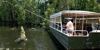 Hartley's Crocodile Adventures Cairns - Crocodile Lagoon Cruises