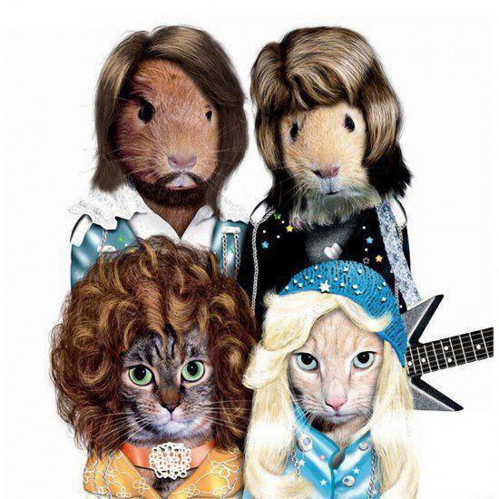 AHUYENTADOR DE GATOS CASERO #soluciones #mascotas #gatos #cats #pets