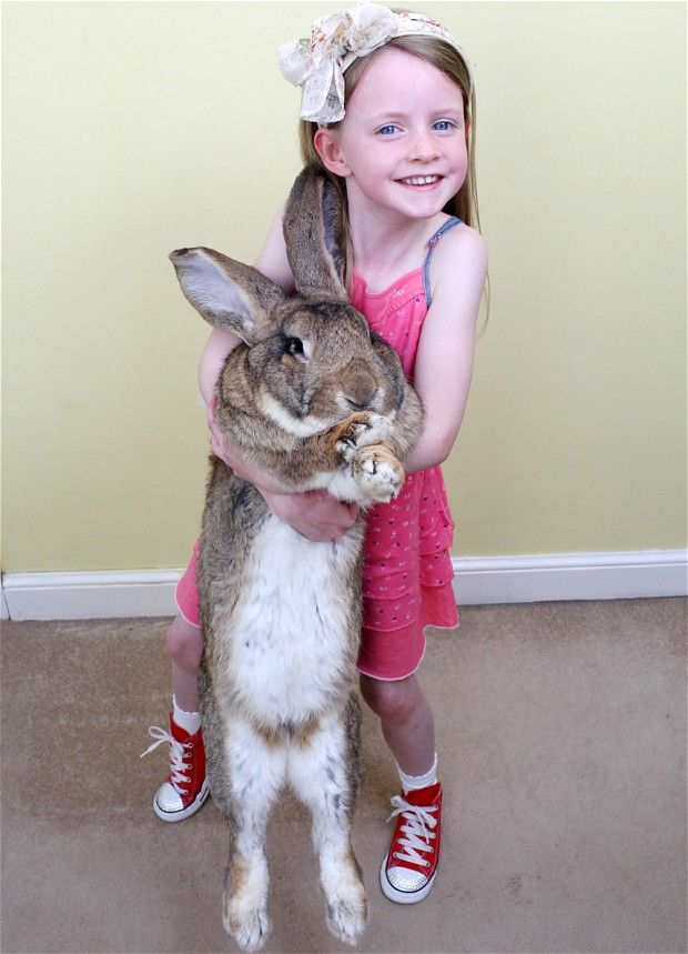 Darius, the worlds largest rabbit