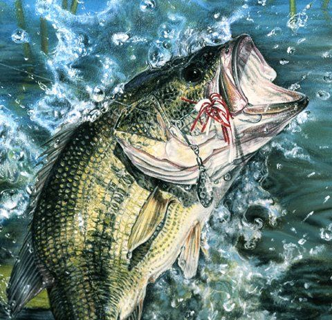 47 best images about tattoo on pinterest for Best bass fishing near me