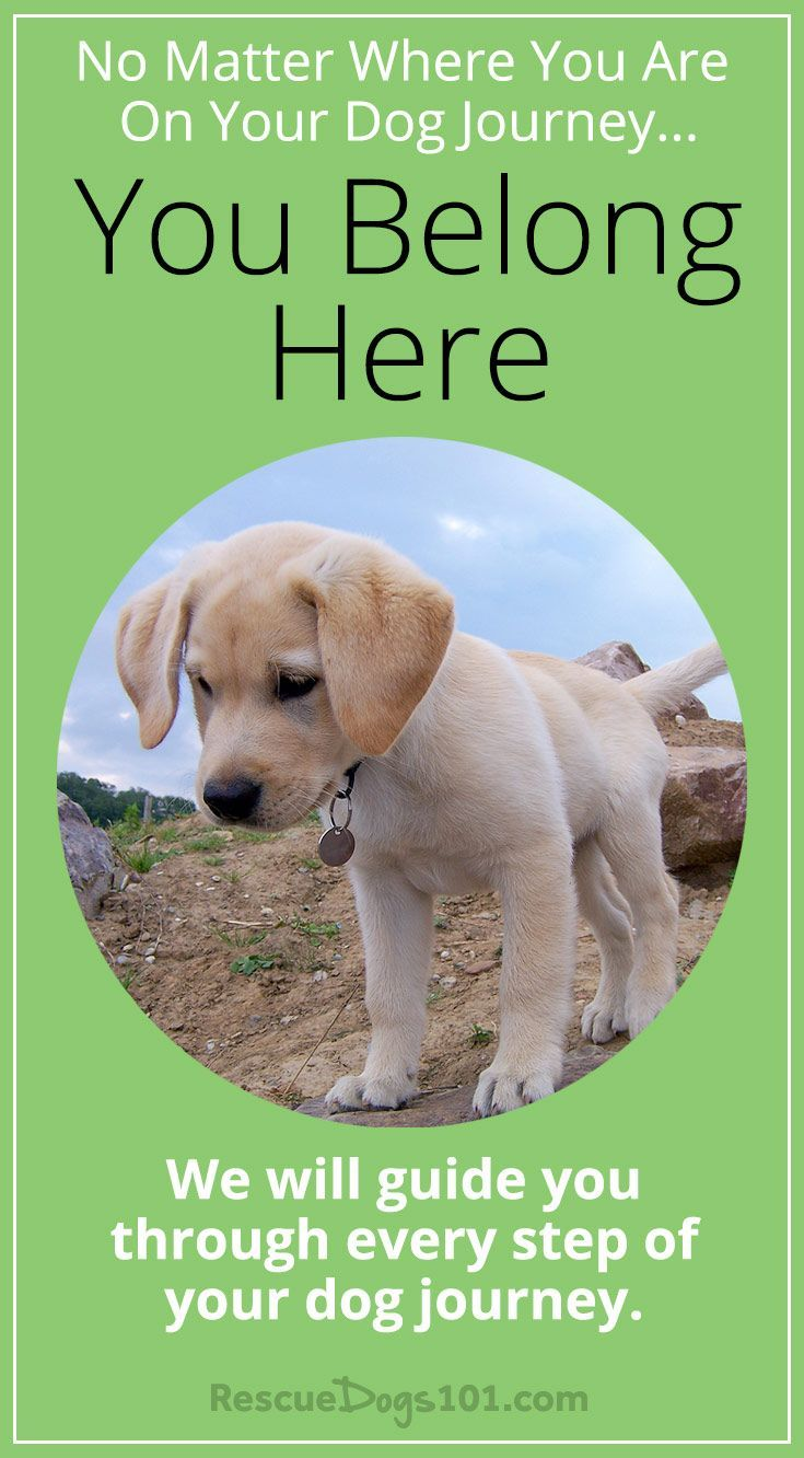 Adopting And Raising Your Perfect Family Dog Rescue Dogs 101 Dog Training Training Your Dog Dog Training Tools