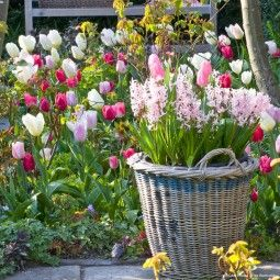 Collection Tulipes Romantiques