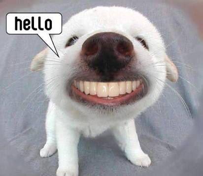 Dog hello