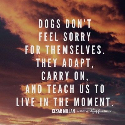 Dogs don't feel sorry for themselves, they don't know if they have limitations, they embrace life. We should all be like that.