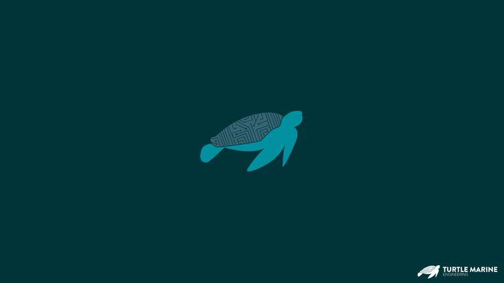 A turtle logo, A tech logo, A Technological turtle logo.