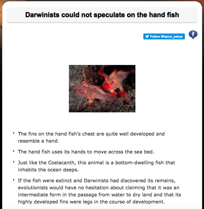 Darwinists could not speculate on the hand fish