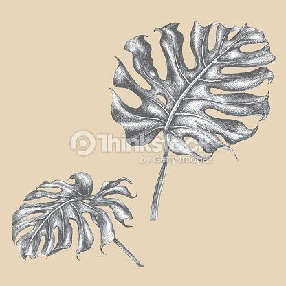 tropical plant leaf - Google Search