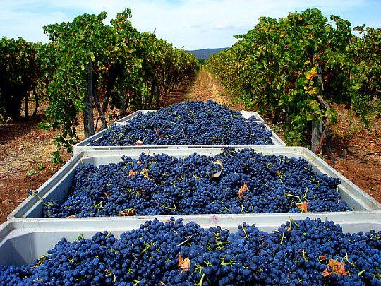 Alentejo Wine Region -  Portugal