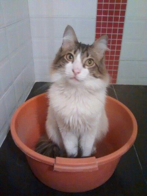 Gatico listo para el baño