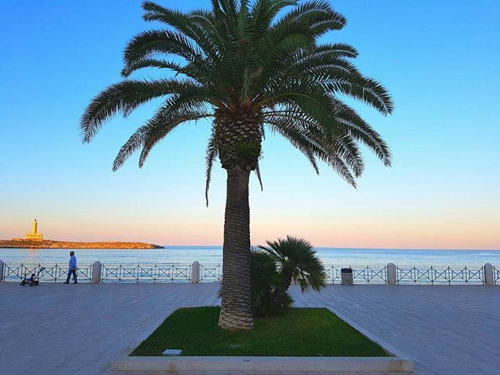 Le palme sono il mio albero preferito  E il lungomare di Vieste ne è pieno...  #blugargano #hotelfalcone #weareinpuglia #puglia365
