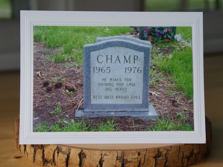 Photo Greeting Card | Photography Card | Photo Note Card | Champ | Blank Photo Card  Pet Sympathy | Loss of a Pet | Headstone | Gravestone by UnexpectedGraceCards on Etsy