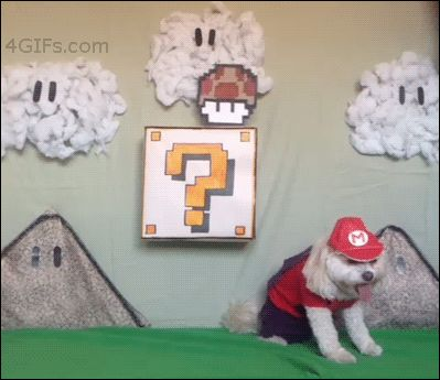 This dog who portrayed the most flawless Mario.   The 47 Absolute Greatest Dog GIFs Of 2013