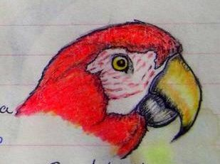 Scarlet Macaw, Mexico,  color pencil & ball ponit pen, 1993
