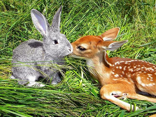 bambi and thumper                                                                                                                                                                                 Mais
