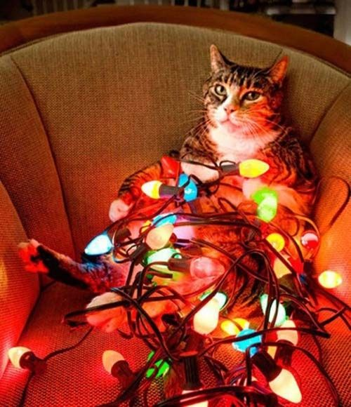 Oh no.....how did this happen?: Christmas Cats, Animals, Tree, Pets, Christmas Lights, Funny, Holidays, Kitty