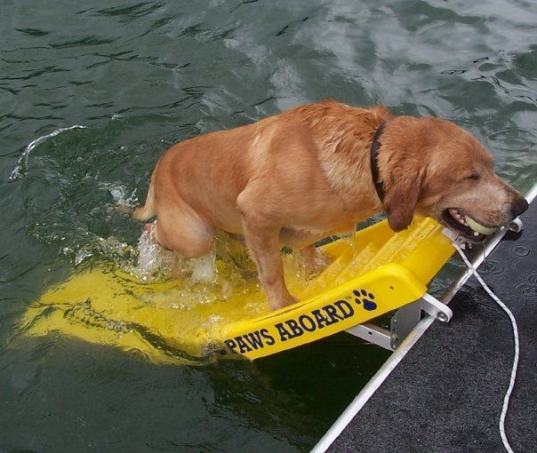 got a boat with a pup who likes to swim?  Also good for elderly people (Drunks) who have trouble climbing a ladder.  Just saying.