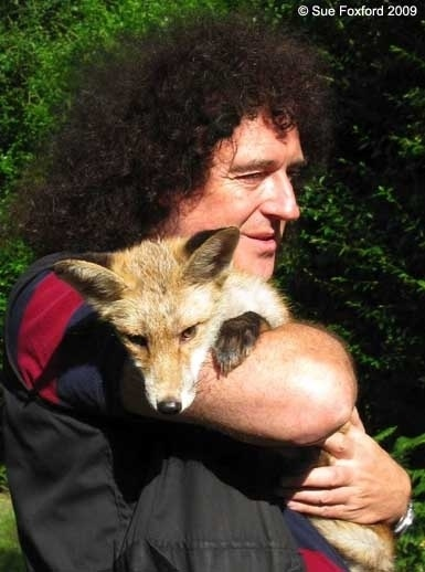 Brian May is Patron of WAAC WALES against ANIMAL CRUELTY. His campaign is:www.Save-Me.org.uk Pledge there to save our wildlife, to fight against David Cameron's pledge to overturn the hunting ban